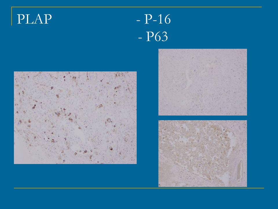 PLAP - P-16 - P63