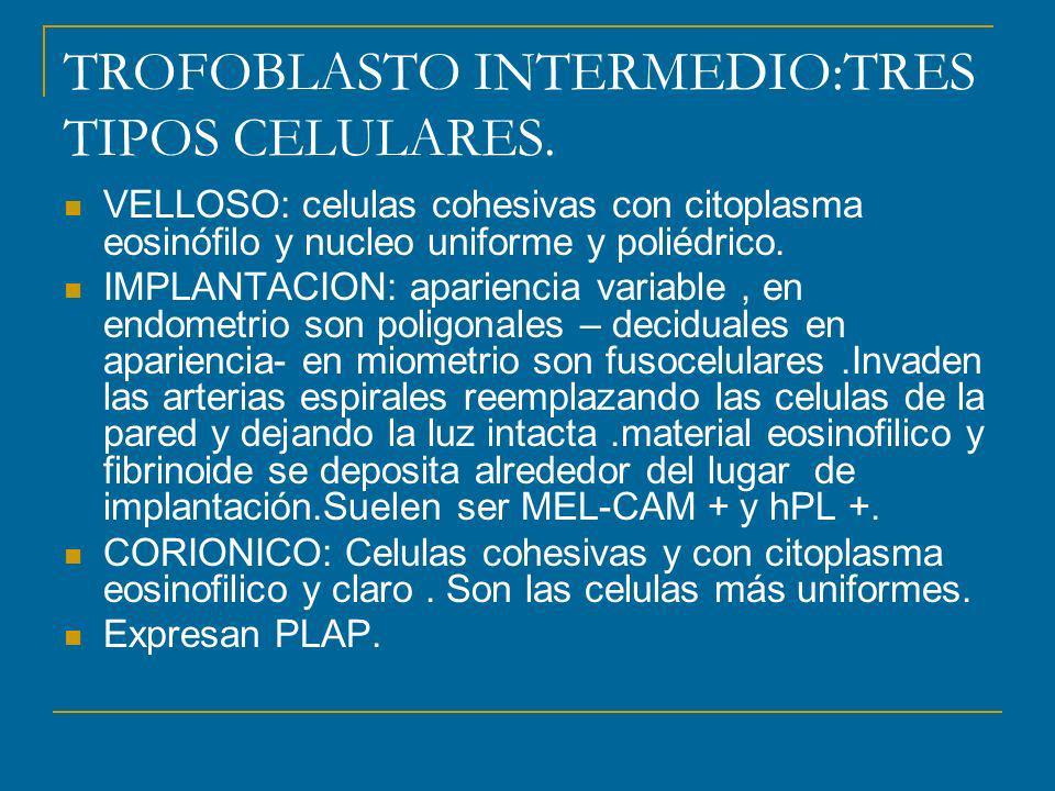 TROFOBLASTO INTERMEDIO:TRES TIPOS CELULARES.