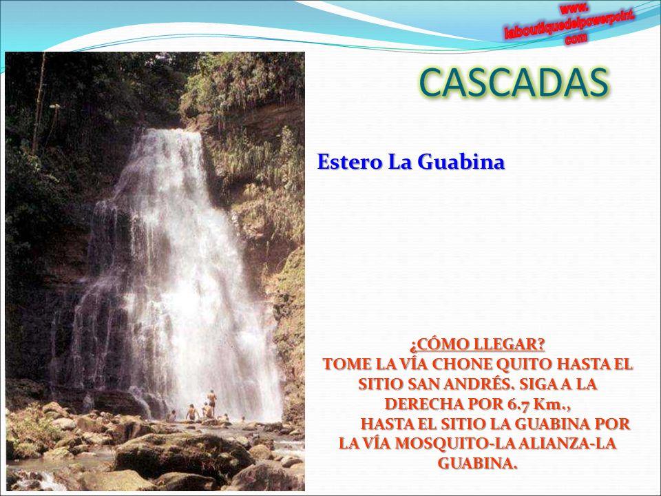 Estero La Guabina ¿CÓMO LLEGAR.TOME LA VÍA CHONE QUITO HASTA EL SITIO SAN ANDRÉS.