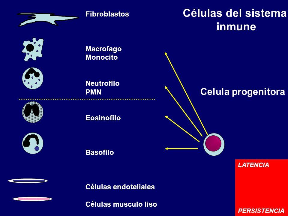 Células del sistema inmune Celula progenitora Fibroblastos Macrofago Monocito Neutrofilo PMN Eosinofilo Basofilo Células endoteliales Células musculo
