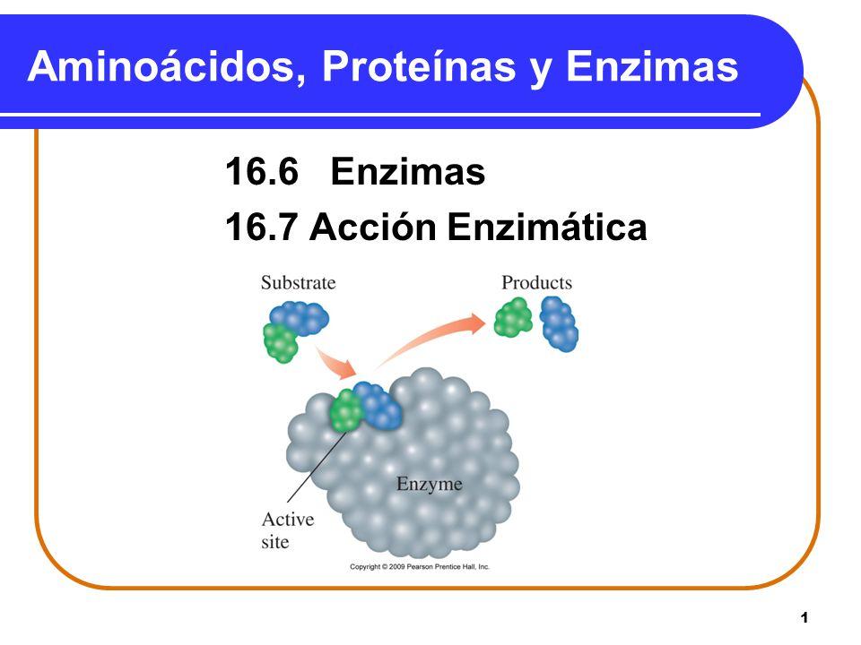 1 Aminoácidos, Proteínas y Enzimas 16.6 Enzimas 16.7 Acción Enzimática