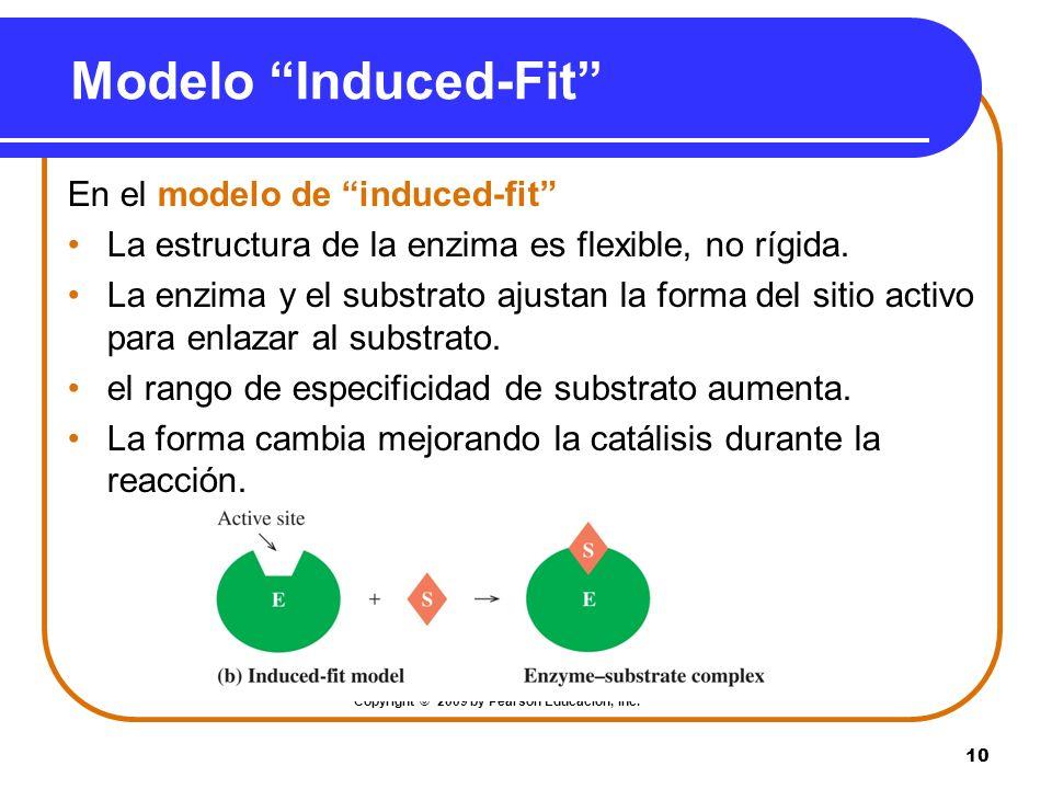 10 Modelo Induced-Fit En el modelo de induced-fit La estructura de la enzima es flexible, no rígida. La enzima y el substrato ajustan la forma del sit