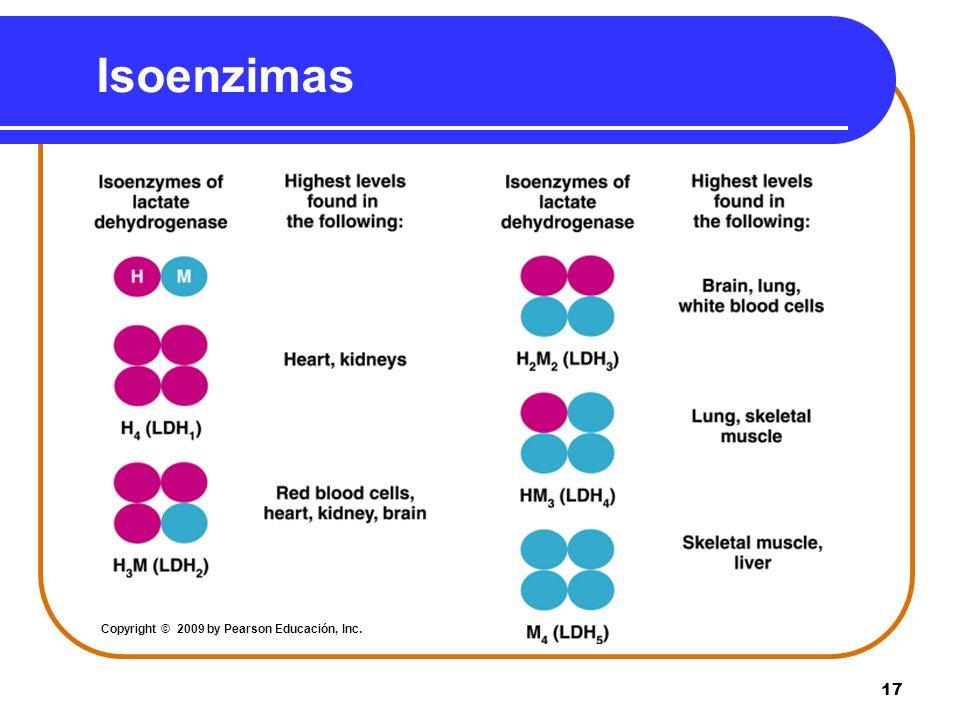 17 Isoenzimas Copyright © 2009 by Pearson Educación, Inc.