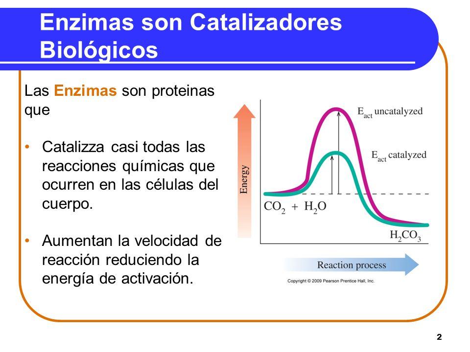 2 Enzimas son Catalizadores Biológicos Las Enzimas son proteinas que Catalizza casi todas las reacciones químicas que ocurren en las células del cuerp