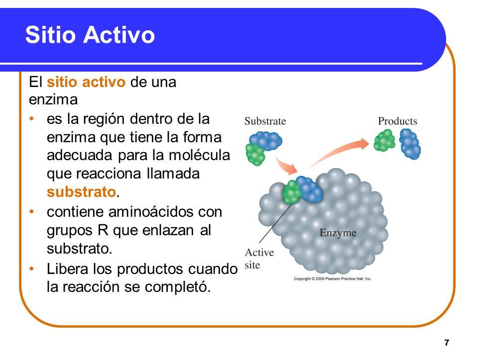7 El sitio activo de una enzima es la región dentro de la enzima que tiene la forma adecuada para la molécula que reacciona llamada substrato. contien