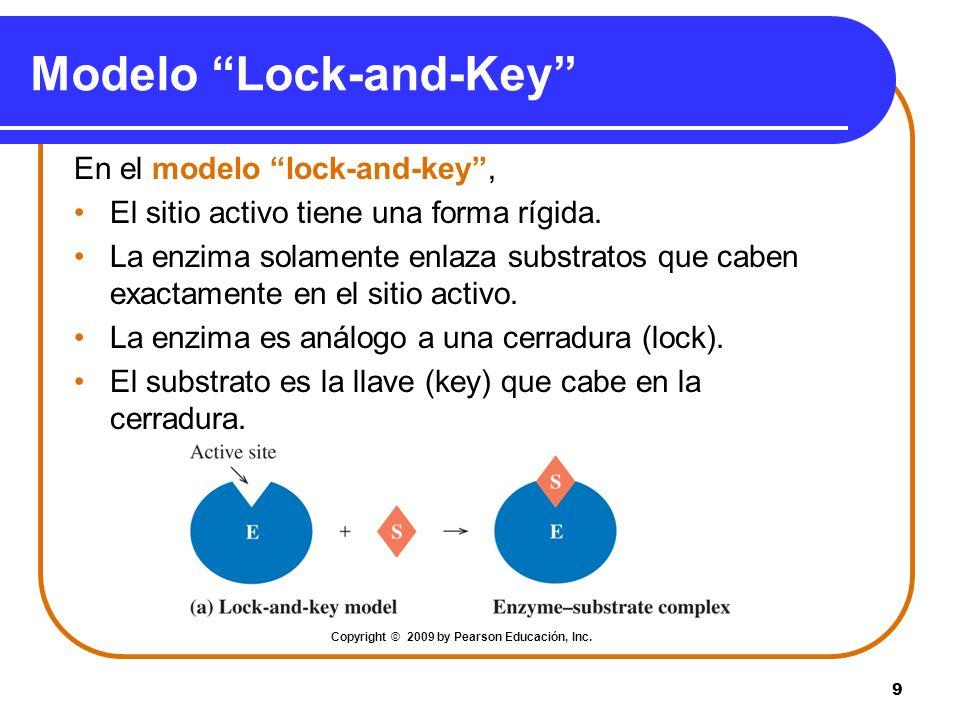 9 Modelo Lock-and-Key En el modelo lock-and-key, El sitio activo tiene una forma rígida. La enzima solamente enlaza substratos que caben exactamente e