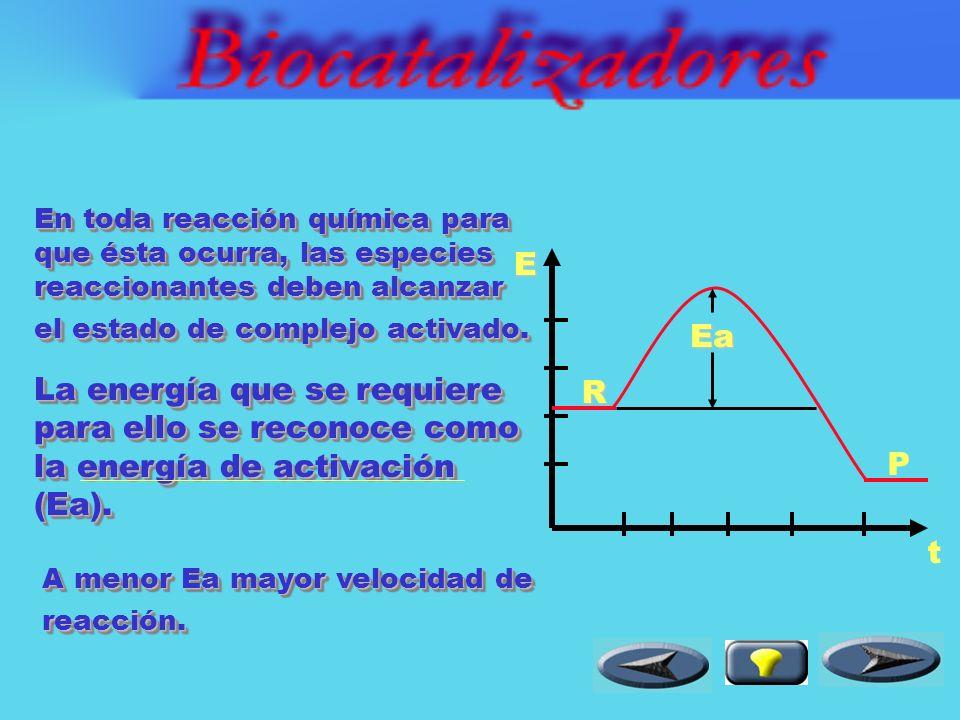 El efecto de los biocatalizadores sobre la energía de activación se puede apreciar fácilmente en un diagrama energético.