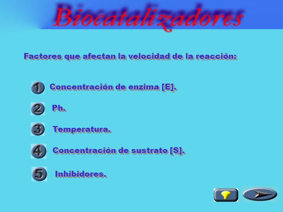 Los biocatalizadores disminuyen la Ea y por ello incrementan la velocidad de la reacción Los biocatalizadores disminuyen la Ea y por ello incrementan la velocidad de la reacción reacción no catalizada reacción catalizada La energía de reacción ( G) está dada por la diferencia de energía libre entre productos y reaccionantes.