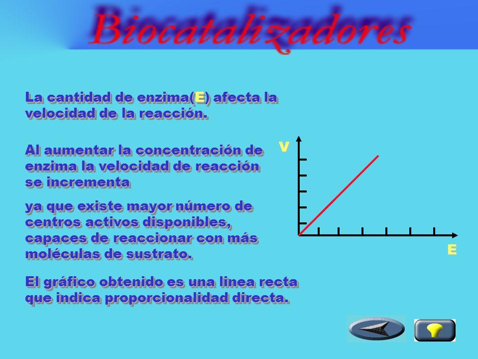 Factores que afectan la velocidad de la reacción: Factores que afectan la velocidad de la reacción: Concentración de enzima [E].