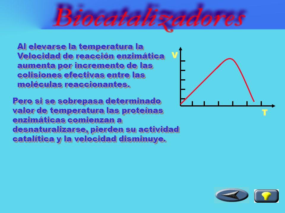 El pH del medio influye sobre el estado iónico de la enzima.