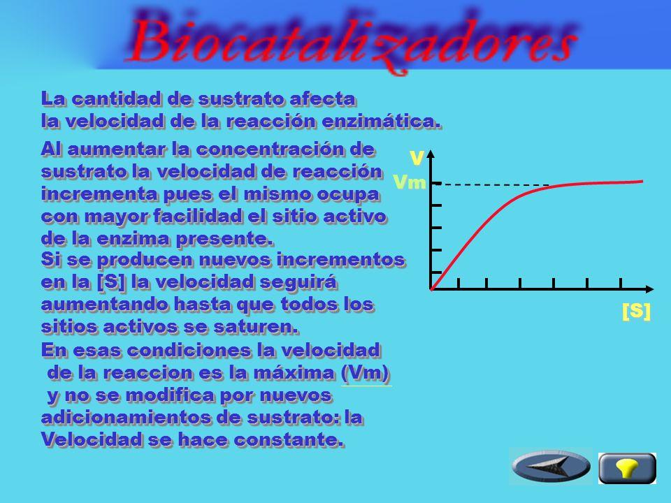 Al elevarse la temperatura la Velocidad de reacción enzimática aumenta por incremento de las colisiones efectivas entre las moléculas reaccionantes.