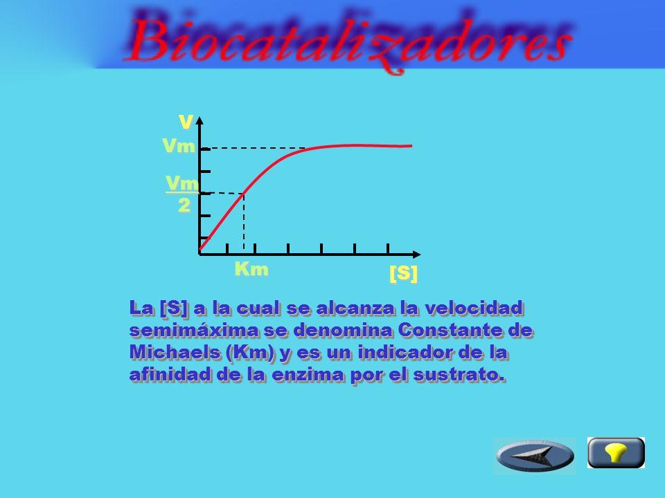 La cantidad de sustrato afecta la velocidad de la reacción enzimática.