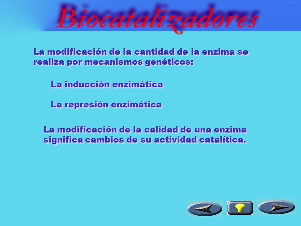 La regulación o control del metabolismo se produce mediante la regulación de una o más enzimas que intervienen en tales procesos.