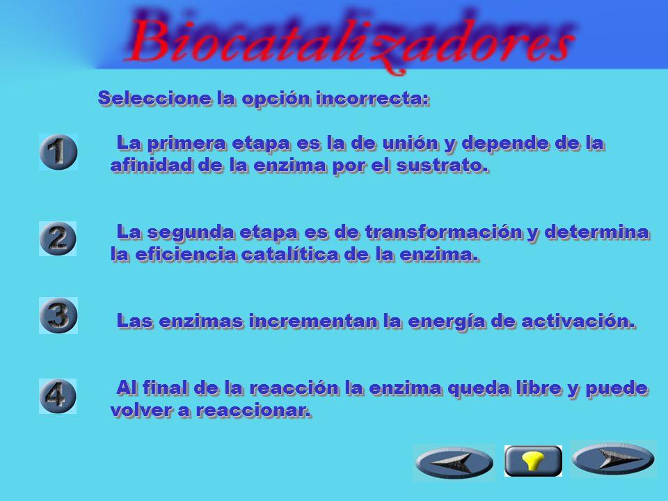 Los biocatalizadores : Incrementan la energía de reacción.