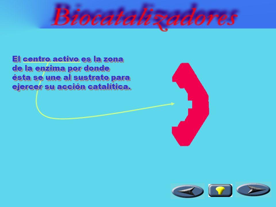 Los biocatalizadores o enzimas son proteínas que presentan actividad catalítica.