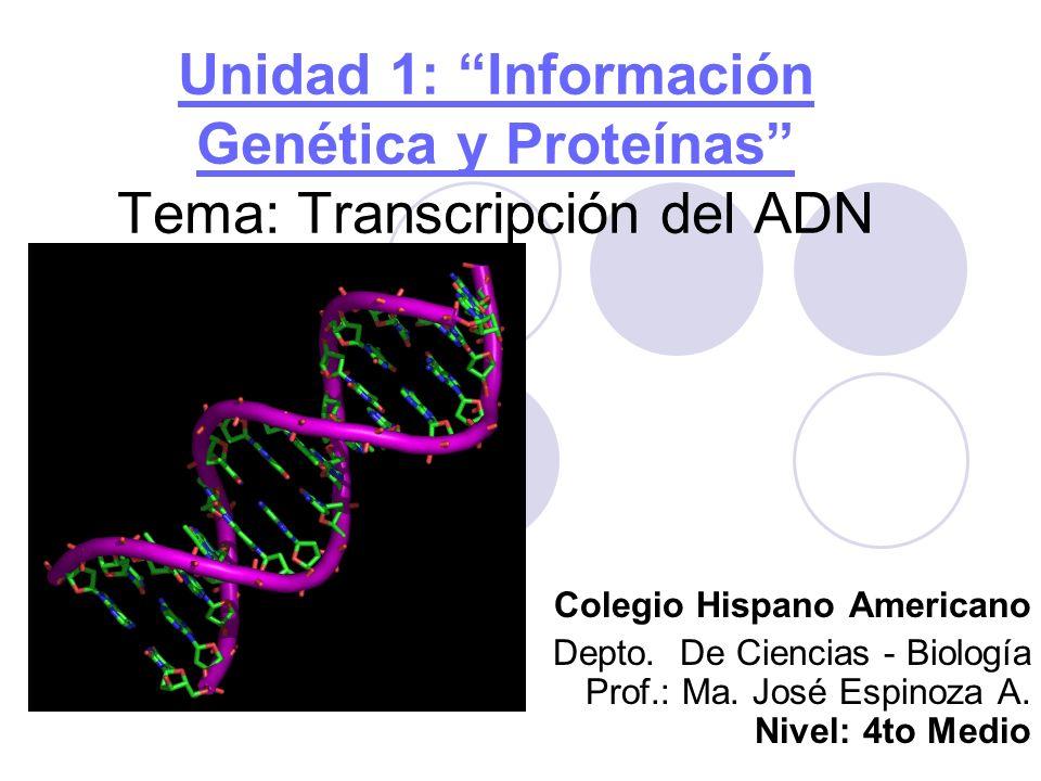 Flujo de Información Genética en la Célula.