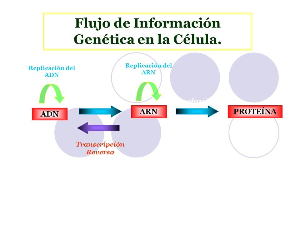Transcripción Síntesis de una cadena de ARN, idéntica en secuencia a una hebra del ADN.