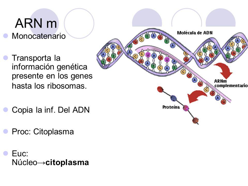 ARN Pol Síntesis 5 3.No necesita un primer y no tiene actividad nucleasa.