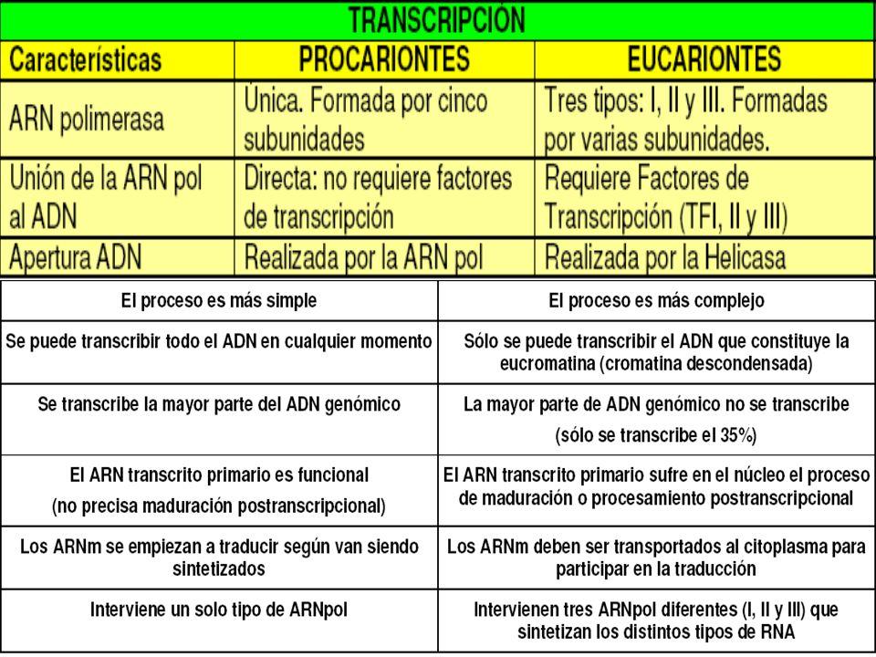 ARN pol en Procariontes 5 subunid.: 2 Alfa, 2 beta y gamma – sigma Sigma: Inicia Transcripción veloc y especificidad de la transcripción Hace reconocer a la ARN pol la señal de inicio o región promotora (10pb) El signo negativo indica que las bases se encuentran antes del sitio de inicio de la transcripción Región Promotora (E.coli - Procariontes) -35 -10 +1 (ADN) ------- TTGACA ------- TATAAT ---------------------------- Inicio de la transcripción