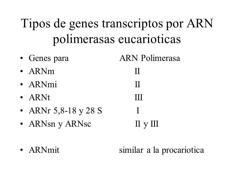 Tipos de genes transcriptos por ARN polimerasas eucarioticas Genes para ARN Polimerasa ARNm II ARNmi II ARNt III ARNr 5,8-18 y 28 S I ARNsn y ARNsc II