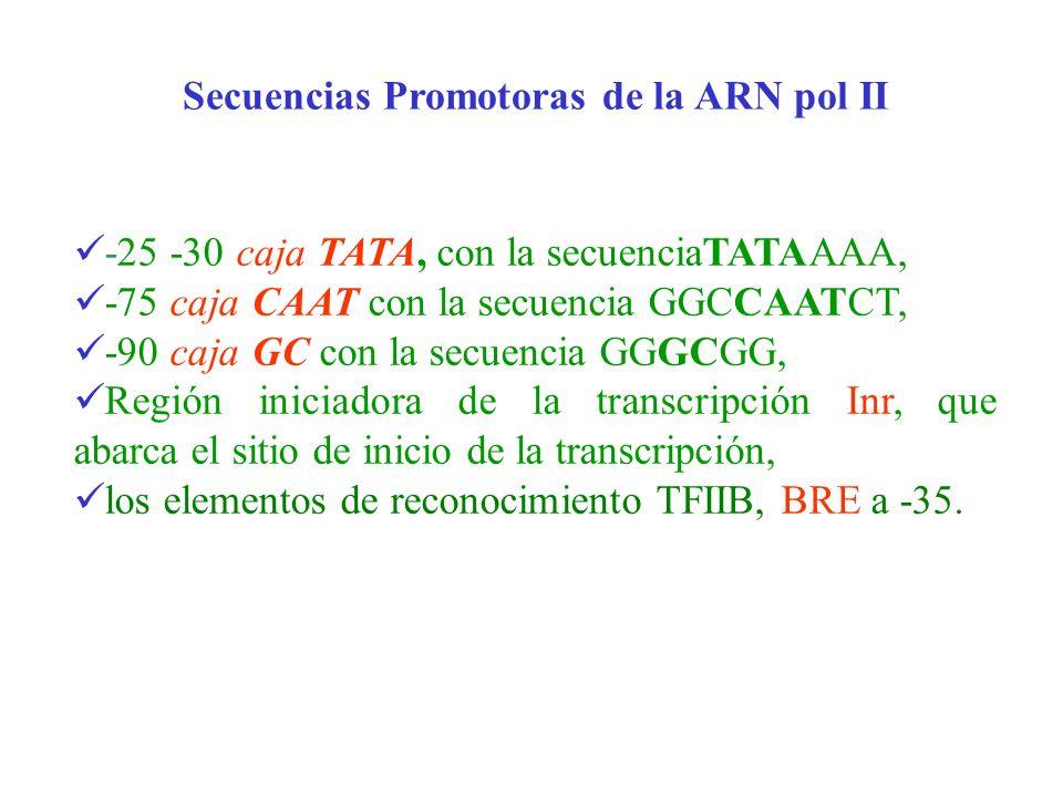-25 -30 caja TATA, con la secuenciaTATAAAA, -75 caja CAAT con la secuencia GGCCAATCT, -90 caja GC con la secuencia GGGCGG, Región iniciadora de la tra