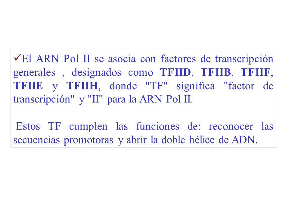 El ARN Pol II se asocia con factores de transcripción generales, designados como TFIID, TFIIB, TFIIF, TFIIE y TFIIH, donde
