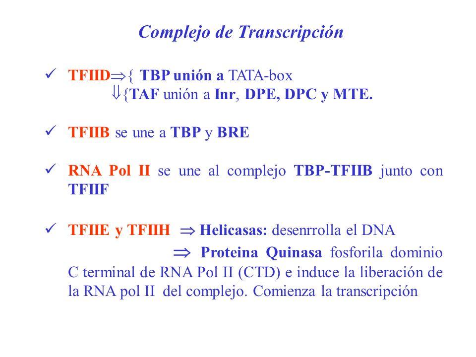 TFIID { TBP unión a TATA-box {TAF unión a Inr, DPE, DPC y MTE. TFIIB se une a TBP y BRE RNA Pol II se une al complejo TBP-TFIIB junto con TFIIF TFIIE