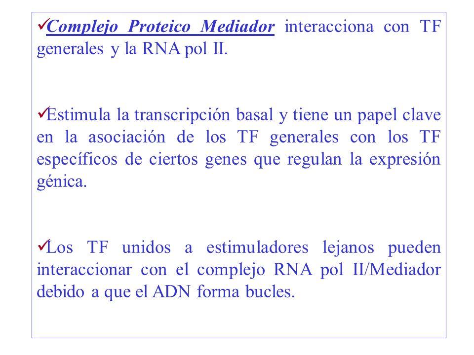 Complejo Proteico Mediador interacciona con TF generales y la RNA pol II. Estimula la transcripción basal y tiene un papel clave en la asociación de l