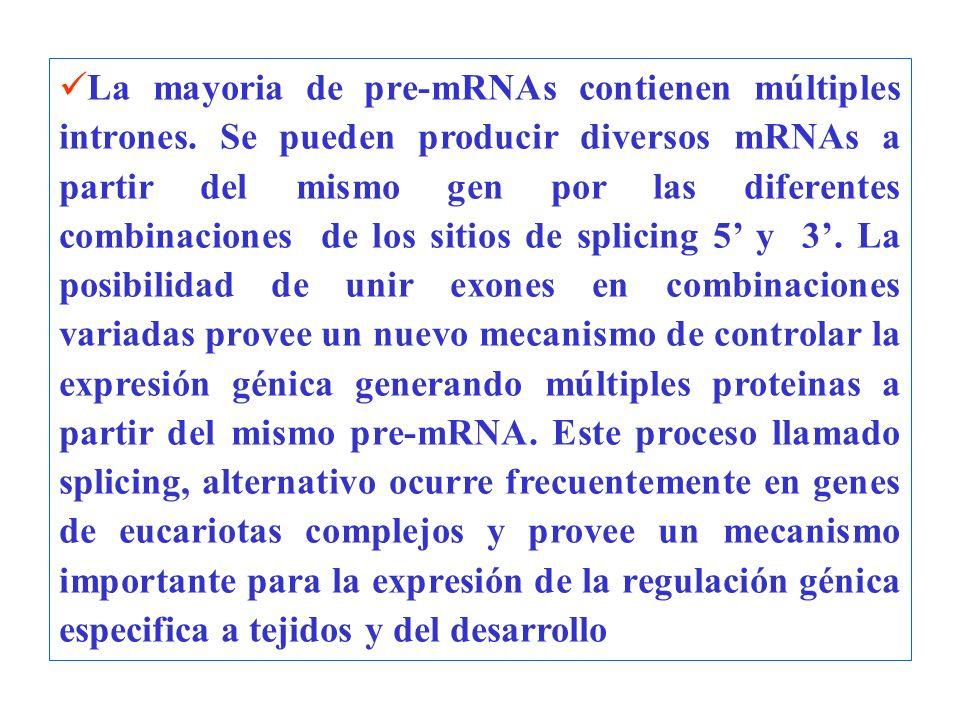 La mayoria de pre-mRNAs contienen múltiples intrones. Se pueden producir diversos mRNAs a partir del mismo gen por las diferentes combinaciones de los