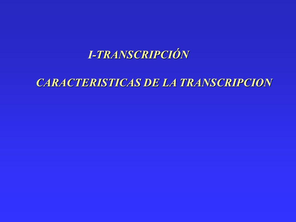 -TRANSCRIPCIÓN I-TRANSCRIPCIÓN CARACTERISTICAS DE LA TRANSCRIPCION