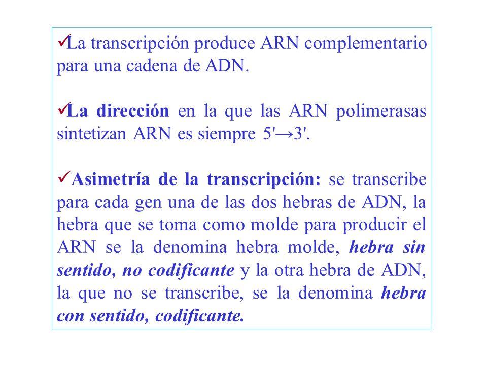 Transcripción de genes por la polimerasa III