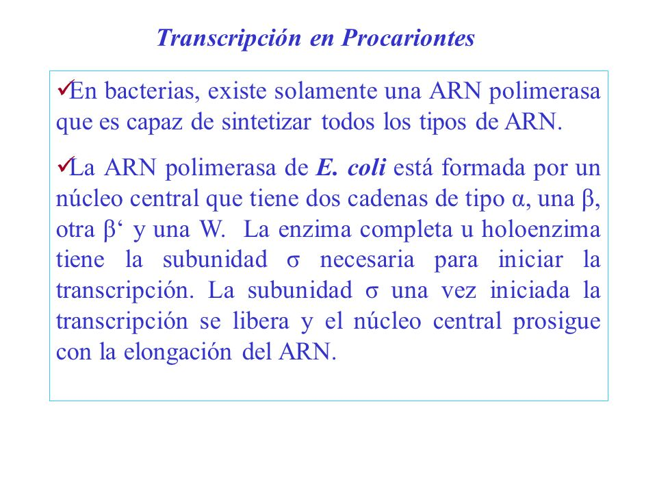 En bacterias, existe solamente una ARN polimerasa que es capaz de sintetizar todos los tipos de ARN. La ARN polimerasa de E. coli está formada por un