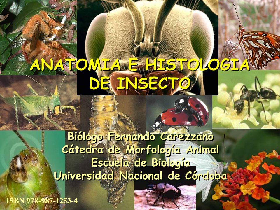 Vista general de un insecto Esta imagen es la vista a mayor aumento del corte histológico del cual se obtuvieron las demás imágenes.