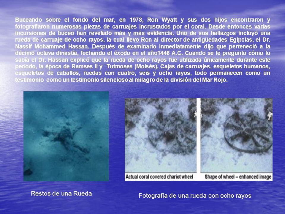 Buceando sobre el fondo del mar, en 1978, Ron Wyatt y sus dos hijos encontraron y fotografiaron numerosas piezas de carruajes incrustados por el coral
