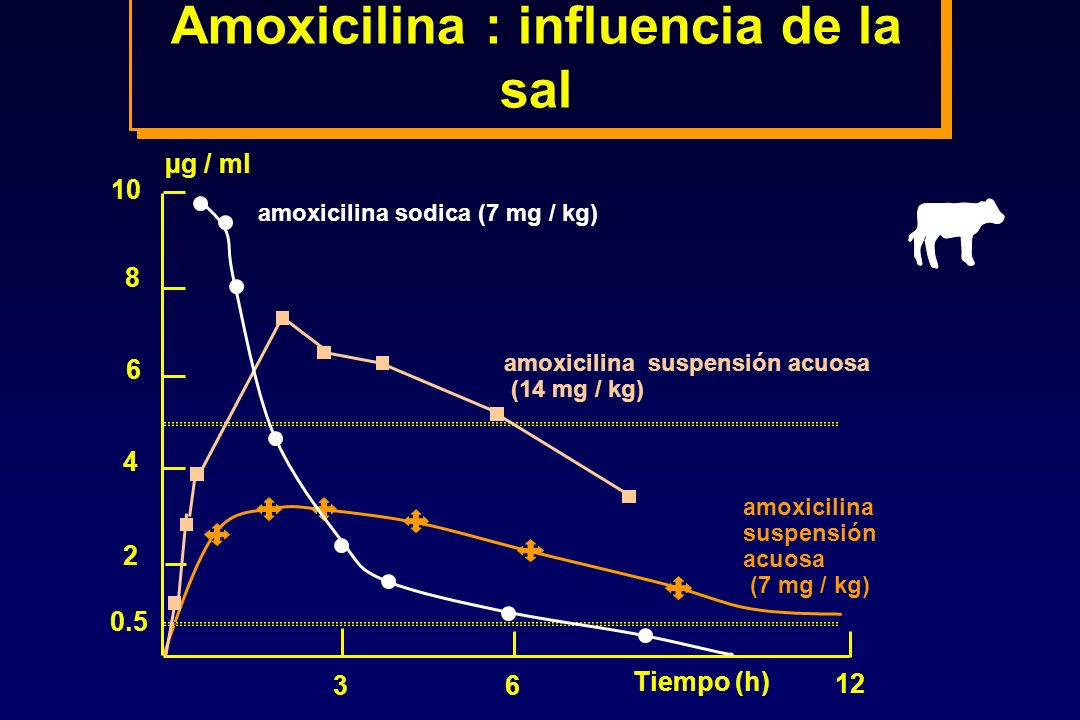 10 8 6 4 2 0.5 36 12 µg / ml Tiempo (h) amoxicilina sodica (7 mg / kg) amoxicilina suspensión acuosa (14 mg / kg) amoxicilina suspensión acuosa (7 mg