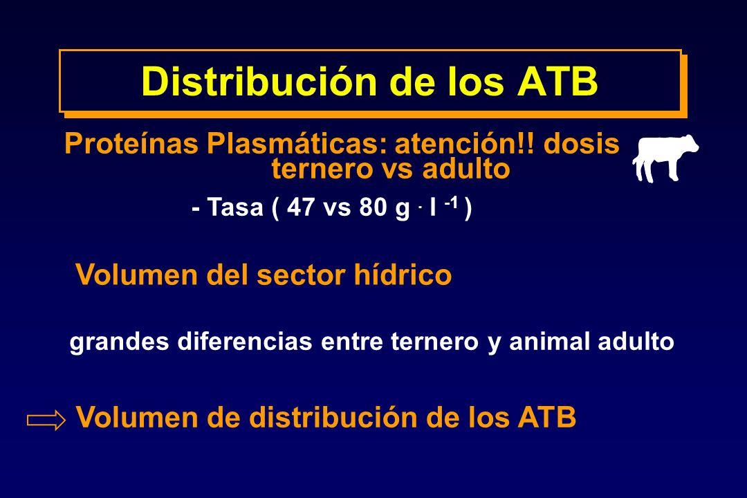- Tasa ( 47 vs 80 g. l -1 ) Volumen del sector hídrico Proteínas Plasmáticas: atención!! dosis ternero vs adulto grandes diferencias entre ternero y a