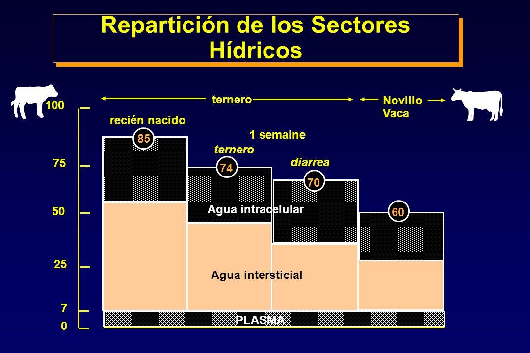 PLASMA Agua intersticial Agua intracelular ternero Novillo Vaca recién nacido 1 semaine ternero diarrea 100 75 50 70 74 85 25 0 7 60 Repartición de lo