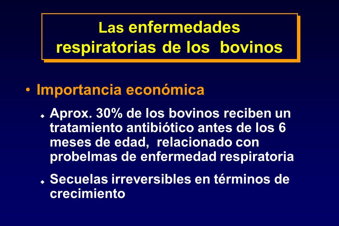 Las enfermedades respiratorias de los bovinos Importancia económica u Aprox. 30% de los bovinos reciben un tratamiento antibiótico antes de los 6 mese