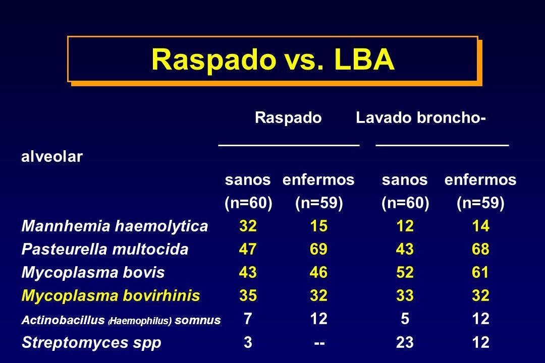 Raspado vs. LBA Raspado Lavado broncho- alveolar sanosenfermossanosenfermos (n=60)(n=59)(n=60)(n=59) Mannhemia haemolytica32151214 Pasteurella multoci
