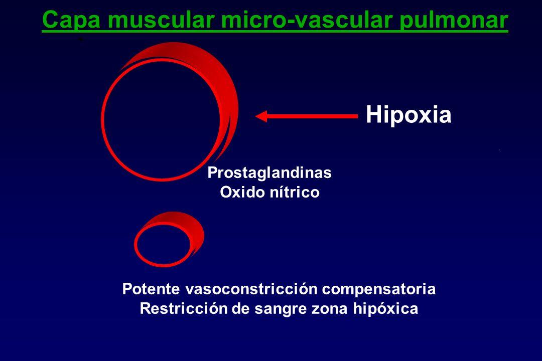 Capa muscular micro-vascular pulmonar Hipoxia Prostaglandinas Oxido nítrico Potente vasoconstricción compensatoria Restricción de sangre zona hipóxica