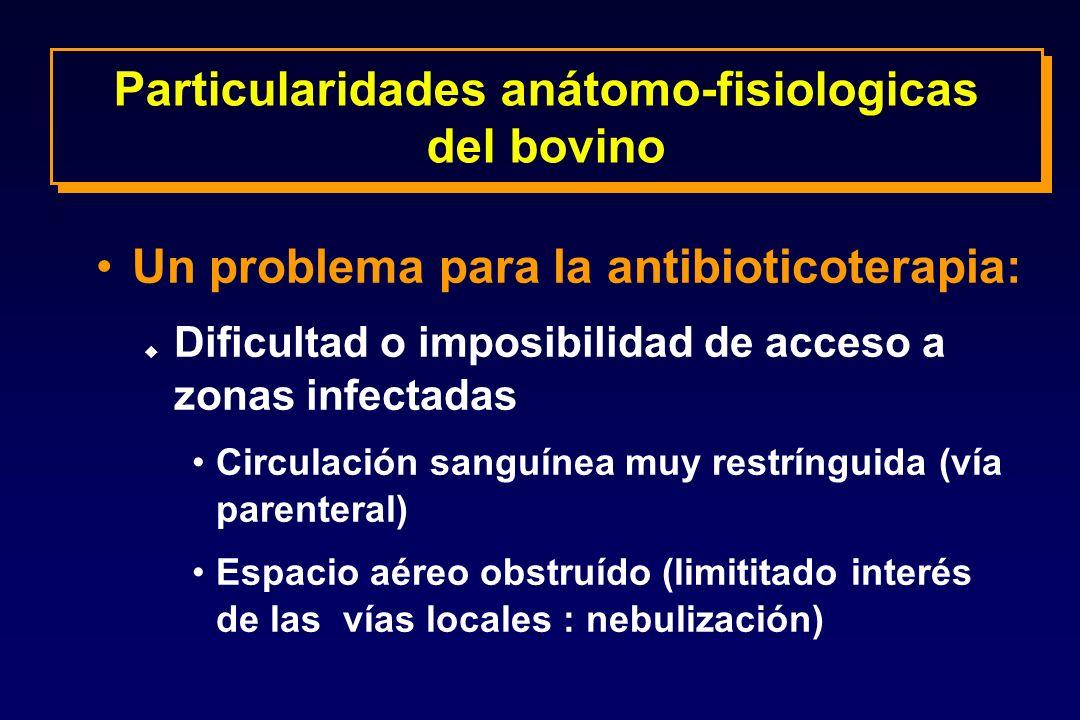 Un problema para la antibioticoterapia: u Dificultad o imposibilidad de acceso a zonas infectadas Circulación sanguínea muy restrínguida (vía parenter