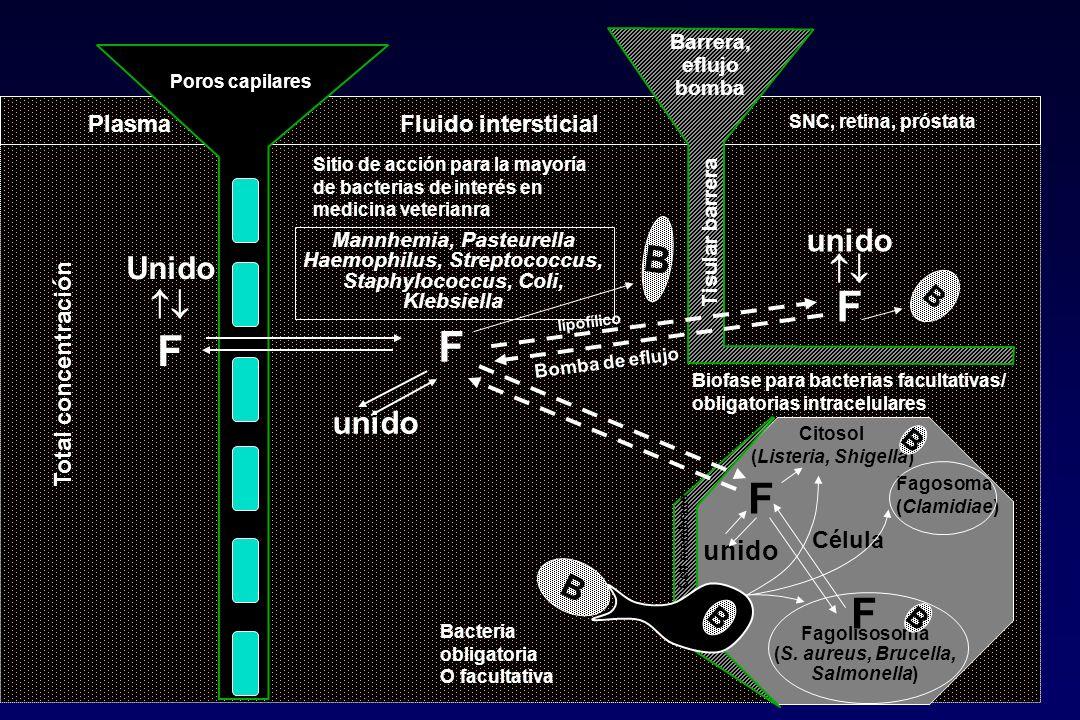 PlasmaFluido intersticial Célula Sitio de acción para la mayoría de bacterias de interés en medicina veterianra Biofase para bacterias facultativas/ o