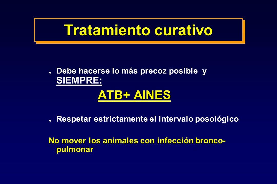 Tratamiento curativo u Debe hacerse lo más precoz posible y SIEMPRE: ATB+ AINES u Respetar estrictamente el intervalo posológico No mover los animales