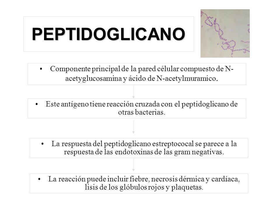 PEPTIDOGLICANO Componente principal de la pared célular compuesto de N- acetyglucosamina y ácido de N-acetylmuramico. Este antígeno tiene reacción cru
