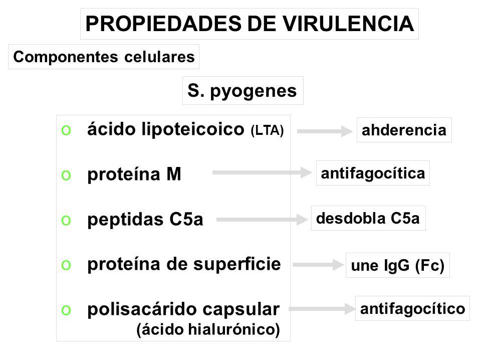 PROPIEDADES DE VIRULENCIA o ácido lipoteicoico (LTA) o proteína M o peptidas C5a o proteína de superficie o polisacárido capsular (ácido hialurónico) S.