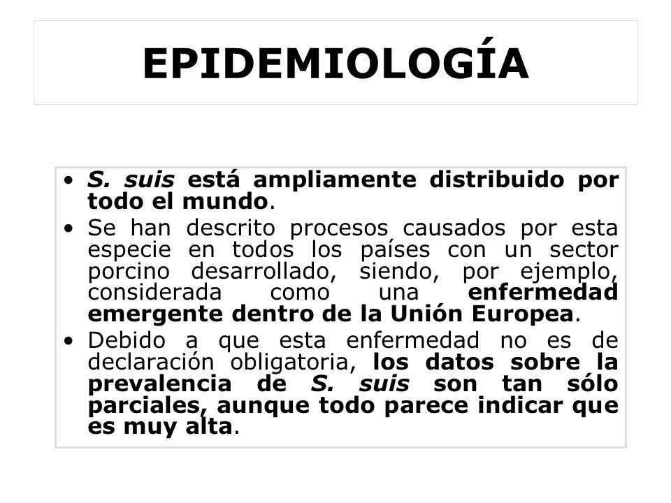 EPIDEMIOLOGÍA S. suis está ampliamente distribuido por todo el mundo. Se han descrito procesos causados por esta especie en todos los países con un se