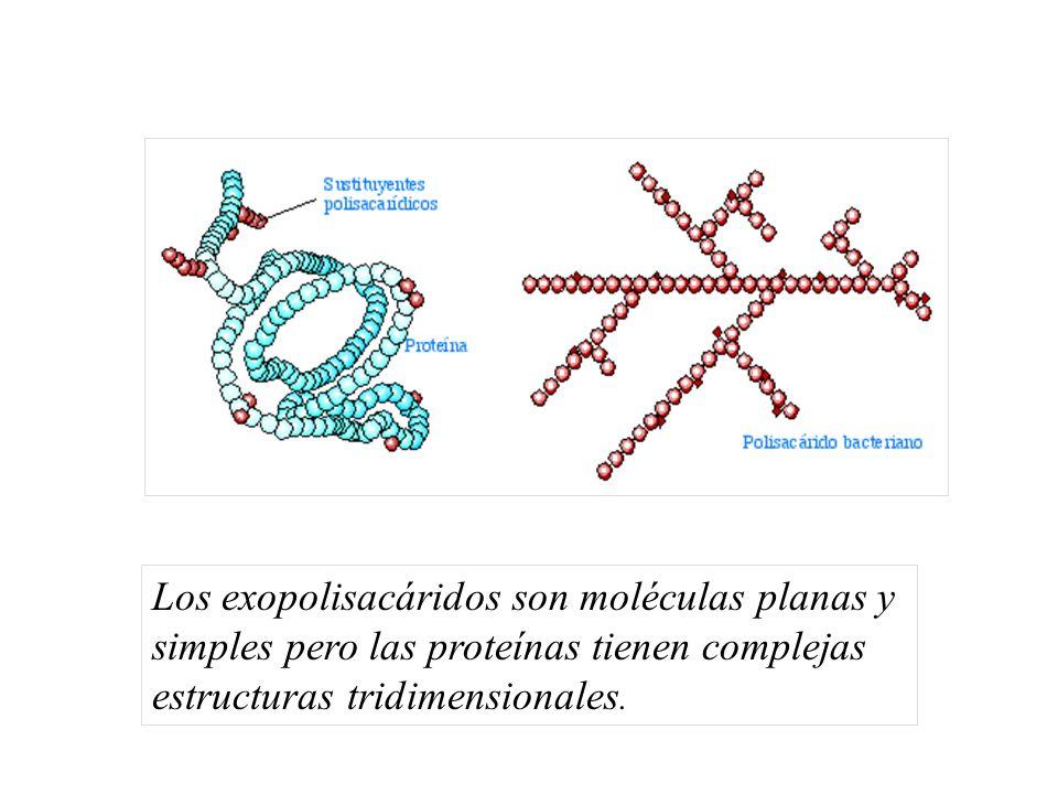 Los exopolisacáridos son moléculas planas y simples pero las proteínas tienen complejas estructuras tridimensionales.