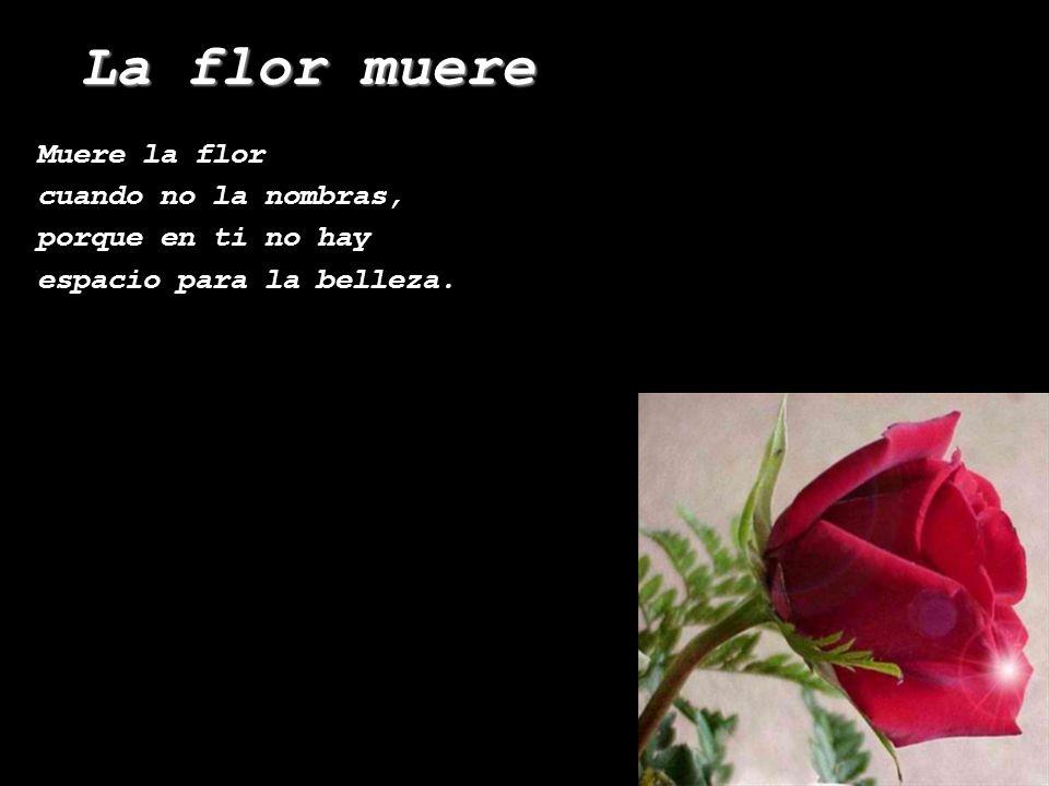 La flor muere Mª José Pérez Grange