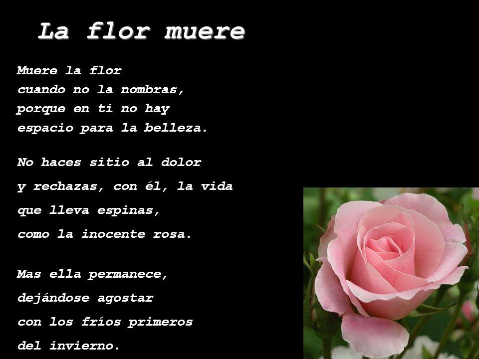 Muere la flor cuando no la nombras, porque en ti no hay espacio para la belleza.