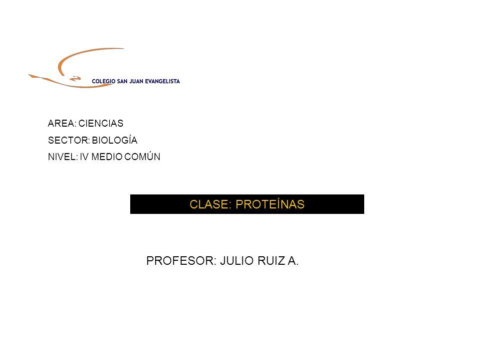 AREA: CIENCIAS SECTOR: BIOLOGÍA NIVEL: IV MEDIO COMÚN CLASE: PROTEÍNAS PROFESOR: JULIO RUIZ A.